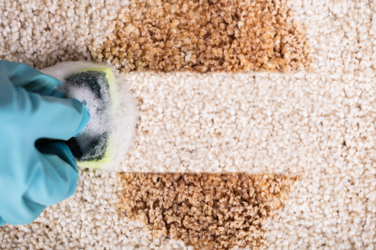 Gloved hand spot cleans a rug stain